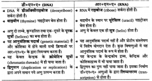 डी०एन०ए० तथा आर०एन०ए० में अन्तर Difference Between DNA & RNA in hindi